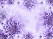 Fondo hermoso blanco-violeta floral Papeles pintados de flores purpúreas claras Composición de la flor Imagen de archivo libre de regalías