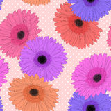 Fondo hermoso con la flor del gerbera Foto de archivo