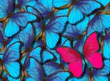 Fondo hermoso con la porción de diversos butterflys fotografía de archivo
