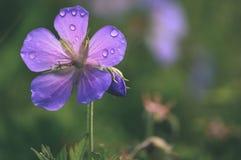 Fondo hermoso con las flores blandas - vintage de la falta de definición del defocus fotos de archivo