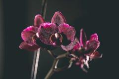 Fondo hermoso con las flores blandas - vintage de la falta de definición del defocus Fotografía de archivo