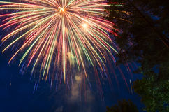 Fondo hermoso con los fuegos artificiales en un cielo azul, y las siluetas de los árboles Imagen de archivo libre de regalías