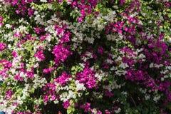 Fondo hermoso de flores Foto de archivo