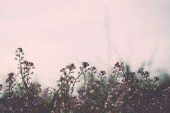 Fondo hermoso de la falta de definición del defocus con las flores blandas foto de archivo libre de regalías