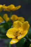 Fondo hermoso de la falta de definición del defocus con las flores blandas fotografía de archivo