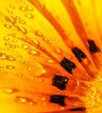 Fondo hermoso de la flor Fotografía de archivo
