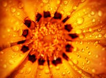 Fondo hermoso de la flor Fotografía de archivo libre de regalías