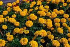 Fondo hermoso de la flor Imagen de archivo