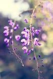 Fondo hermoso de la flor Fotos de archivo
