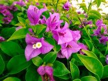Fondo hermoso de la flor Imagen de archivo libre de regalías