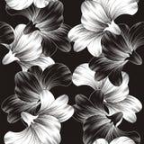 Fondo hermoso de la flor del vector Foto de archivo libre de regalías