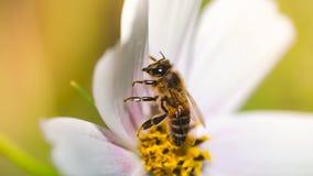 Fondo hermoso de la naturaleza con flores y una abeja Apenas llovido encendido Fondo enmascarado hermoso Imágenes de archivo libres de regalías