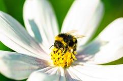 Fondo hermoso de la naturaleza con flores y una abeja Apenas llovido encendido Fondo enmascarado hermoso Imagenes de archivo