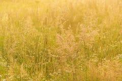 Fondo hermoso de la naturaleza con la hierba del campo y la luz del sol amarilla Imagenes de archivo