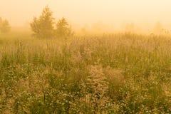 Fondo hermoso de la naturaleza con la hierba del campo y la luz del sol amarilla Fotos de archivo