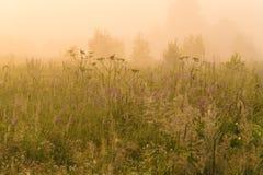 Fondo hermoso de la naturaleza con la hierba del campo y la luz del sol amarilla Imágenes de archivo libres de regalías