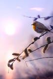 Fondo hermoso de la naturaleza de la mañana de la primavera del arte Imagen de archivo libre de regalías