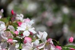 Fondo hermoso de la naturaleza del tiempo de primavera Fotos de archivo libres de regalías