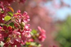 Fondo hermoso de la naturaleza del tiempo de primavera Foto de archivo libre de regalías
