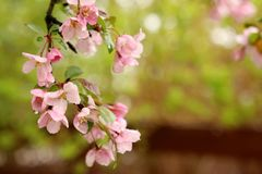 Fondo hermoso de la naturaleza del tiempo de primavera Fotos de archivo