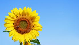 Fondo hermoso de la naturaleza del verano Fotos de archivo libres de regalías