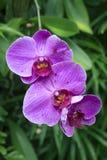 Fondo hermoso de la orquídea fotos de archivo