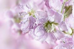 Fondo hermoso de la primavera con las flores Fotografía de archivo libre de regalías