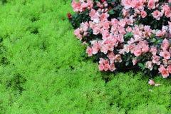 Fondo hermoso de las flores Fotografía de archivo libre de regalías