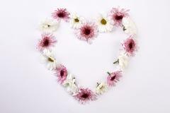 Fondo hermoso de las flores Fotografía de archivo