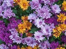 Fondo hermoso de las flores imagenes de archivo