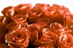 Fondo hermoso de las rosas fotografía de archivo libre de regalías