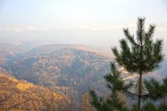 Fondo hermoso de montañas y del abeto Foto de archivo libre de regalías