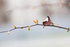 Fondo hermoso del bokeh de la vida de la conexión de la primavera del otoño aún Rama de árbol con los brotes verdes rojos jovenes Fotos de archivo