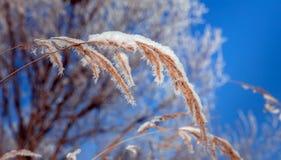 Fondo hermoso del invierno Imagenes de archivo