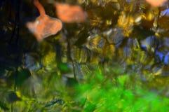 Fondo hermoso del otoño Autumn Leaves Reflexiones coloridas en el agua El otoño es artista fotos de archivo