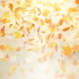 Fondo hermoso del otoño con las hojas de otoño del arce y el sol delicado EPS 10 libre illustration