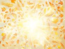 Fondo hermoso del otoño con las hojas de otoño del arce y el sol delicado EPS 10 ilustración del vector