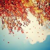 Fondo hermoso del otoño del vintage Imagen de archivo libre de regalías