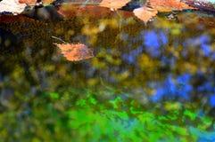 Fondo hermoso del otoño Hojas de otoño y reflexiones coloridas en el agua fotografía de archivo libre de regalías