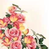 Fondo hermoso del vector con las rosas stock de ilustración