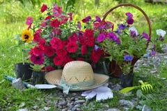 Fondo hermoso del verano con las flores, los utensilios de jardinería y el sombrero de paja Fotos de archivo