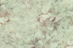 Fondo hermoso del vintage floral Los papeles pintados de flores encienden - rosa - la peonía blanca Composición de la flor Primer Foto de archivo