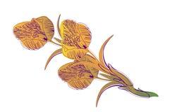 Fondo hermoso en el blanco para una tarjeta, un azafrán de la flor de la bandera Imagen de archivo