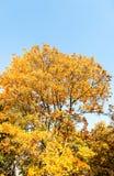 Fondo, hojas y ?rboles de la escena de la naturaleza del oto?o al aire libre fotos de archivo