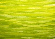 Fondo horizontal de la hierba de la primavera pintado con aguazo Imagen de archivo