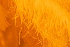 Fondo horizontal de la textura anaranjada de la pluma Foto de archivo libre de regalías