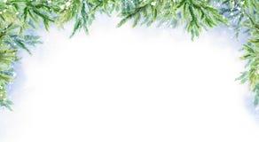 Fondo horizontal del invierno abstracto de la acuarela Ramificaciones del abeto Paisaje del invierno libre illustration