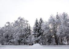 Fondo horizontal del papel pintado del camino del sol de la nieve del invierno del paisaje del abedul de los árboles de navidad d Imágenes de archivo libres de regalías