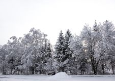 Fondo horizontal del papel pintado del camino del sol de la nieve del invierno del paisaje del abedul de los árboles de navidad d Imagen de archivo