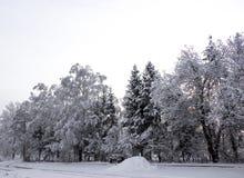 Fondo horizontal del papel pintado del camino del sol de la nieve del invierno del paisaje del abedul de los árboles de navidad d Fotografía de archivo